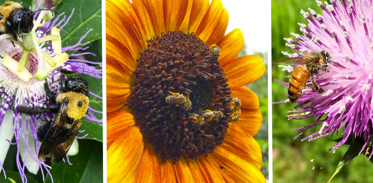 Our top 10 favorite pollinator plants for the summer garden thumbnail