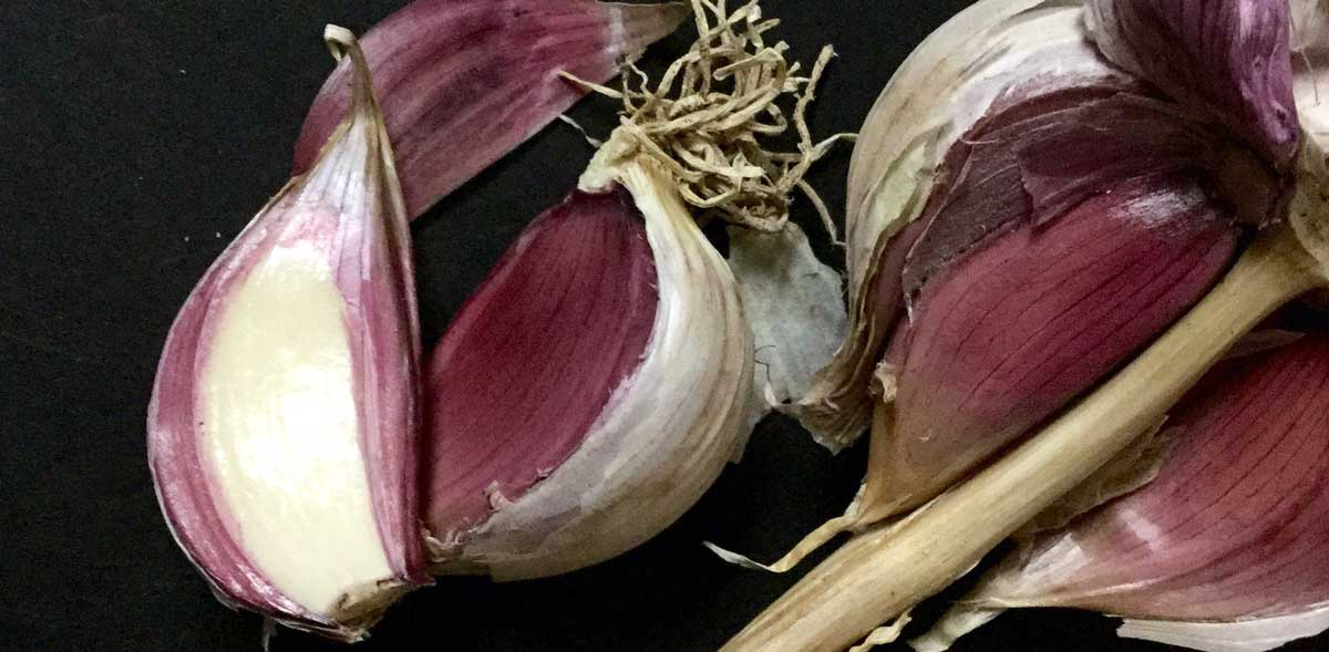 A Love Story: Why and How to Grow Hardneck Garlic  thumbnail