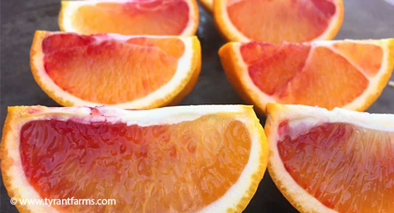 Probably our favorite fresh-eating citrus that we grow: blood oranges. These are a little early in the season before the full red color has developed. We zest them before eating, to get a secondary product. We would not recommend consuming the zest of non-organic citrus.