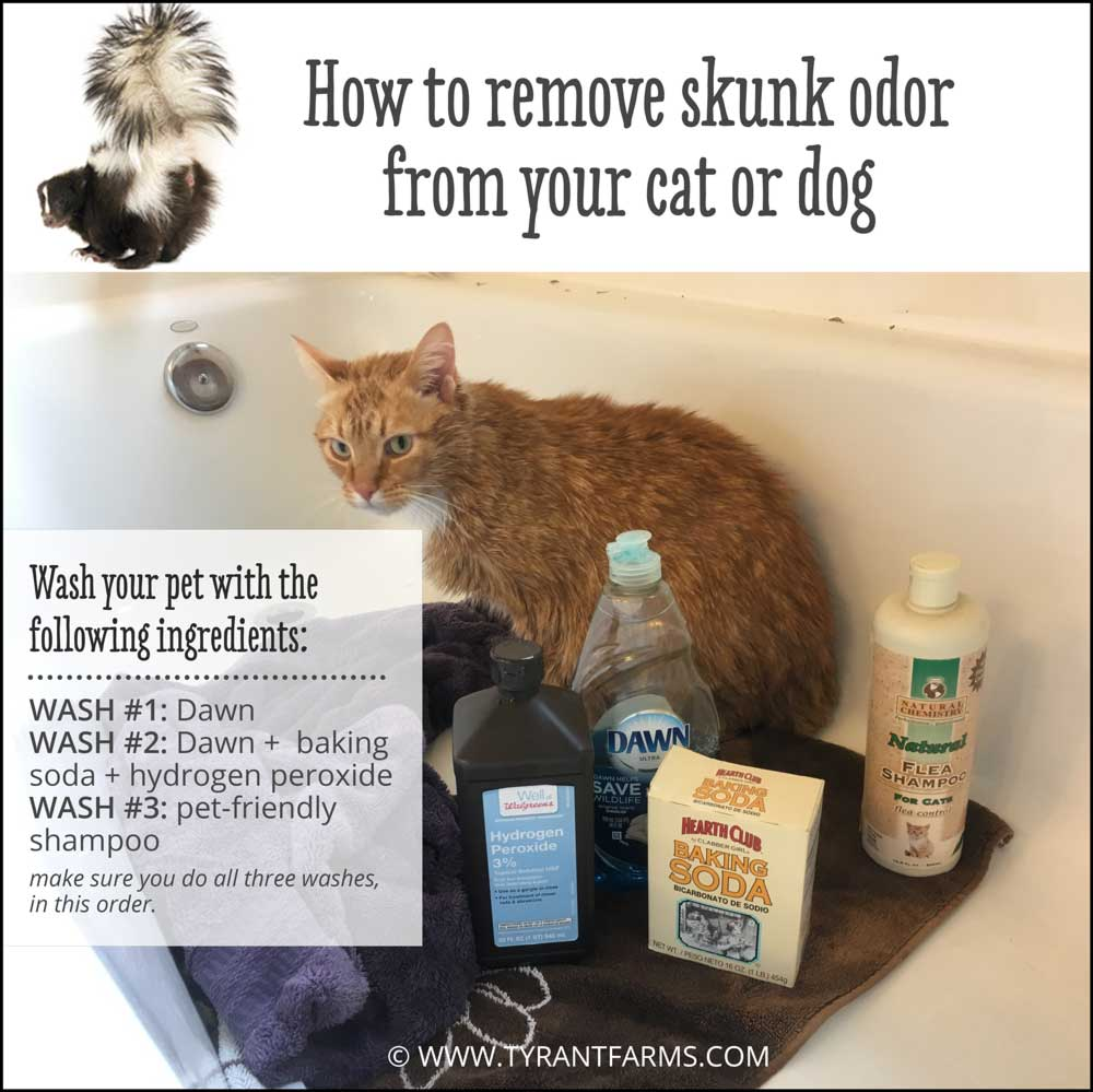 How To Get Skunk Smell Off Your Cat Or Dog Tyrant Farms