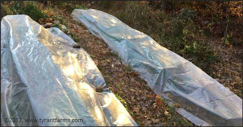 Winter gardening: Low tunnels on a terraced hill in our back yard. These look downright toasty here, but...