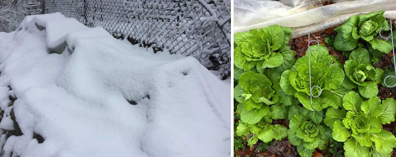 Winter gardening with low tunnels thumbnail