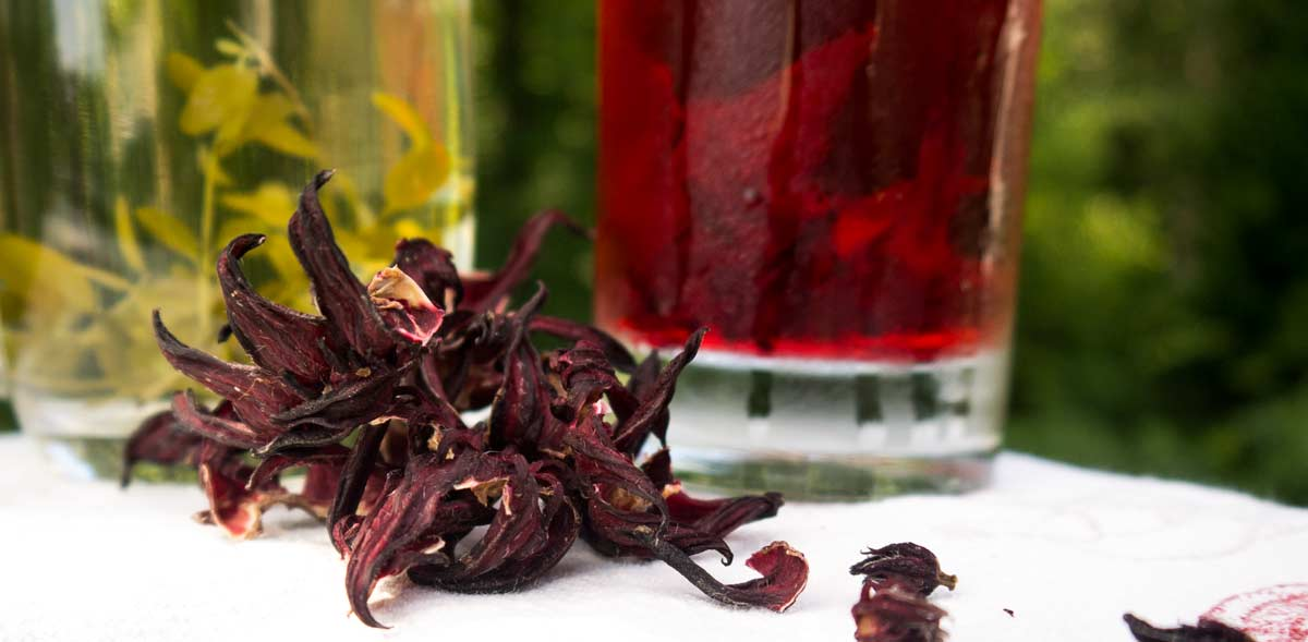 6 Delicious Teas You'll Be Surprised You Can Make From Common Garden Plants thumbnail