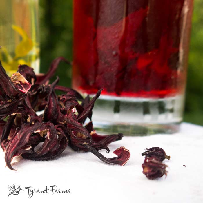 hibiscus tea from calyx harvested at Tyrant Farms - www.tyrantfarms.com