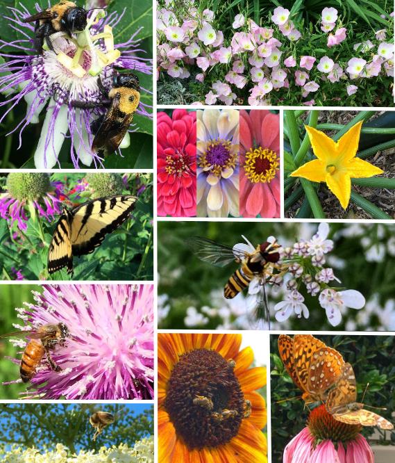 Top-10 edible and medicinal pollinator-friendly plants for the summer garden. -TyrantFarms.com