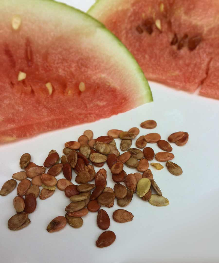 Navajo Red Seeded watermelon seeds.